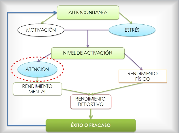 jerarquia rendimiento-atencion